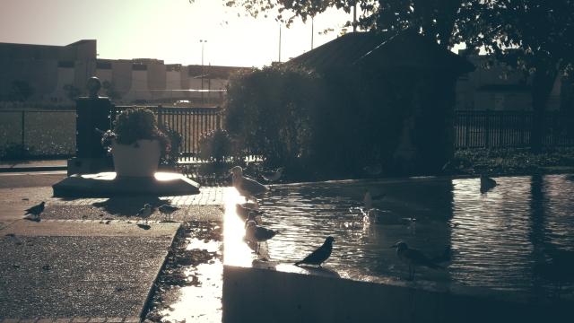 Bath time with Birds